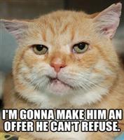 godfathercat.jpg